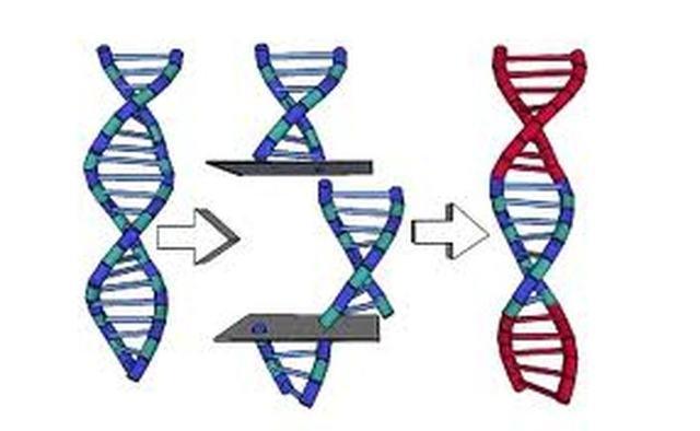 Gene Splicing is developed (1 year early)