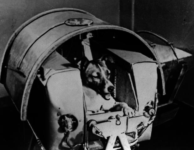 Sputnik II is launched into orbit