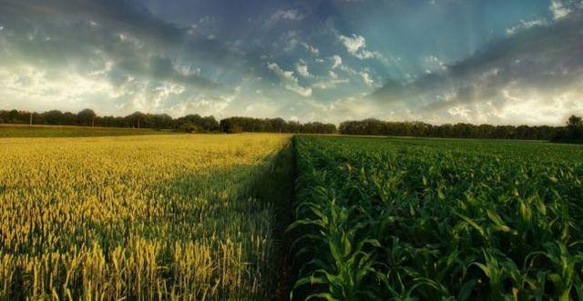 Productos  agrícolas sensibles
