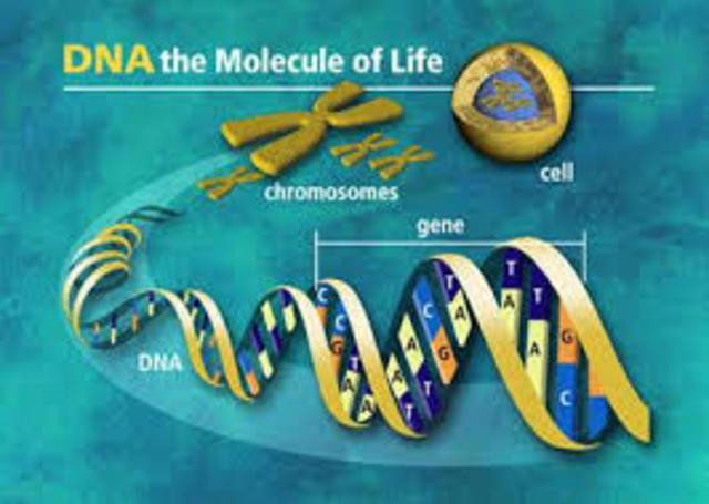 Técnicas de ingeniería genética más precisas