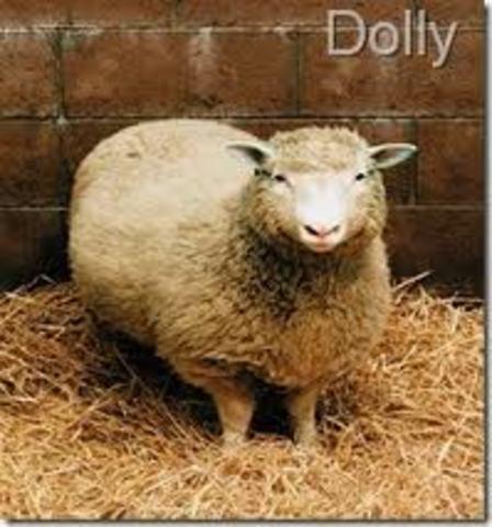 Clonación De Una oveja
