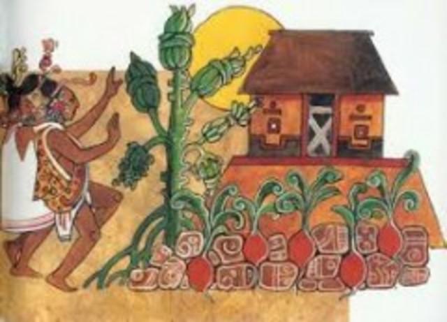Mayas y su división de Tenencia