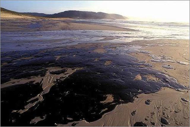 El fuel vertido por el petrolero Prestige continúa llegando a las costas gallegas y cantábricas.