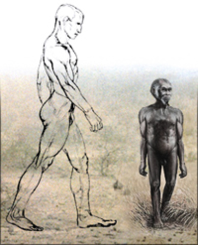 Homo floresiensis (Hobbit)