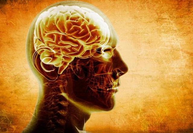 Cómo ver dentro de un cerebro