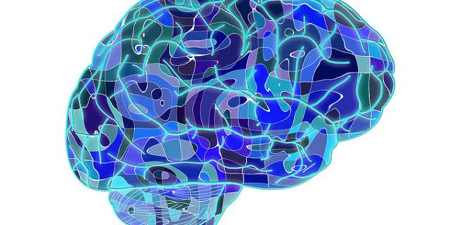 Un circuito cerebral borra memorias