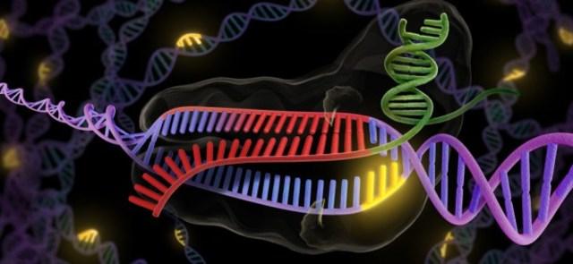 Nuevos avances en la edición del genoma