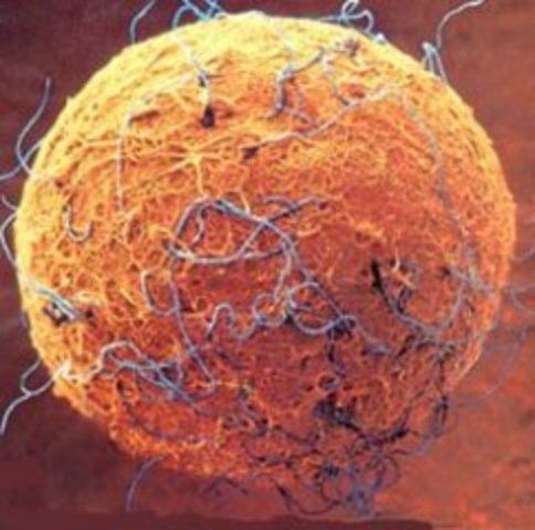 Las células madre adultas se reconoce que tienen potencial para generar diversidad de células de otros órganos