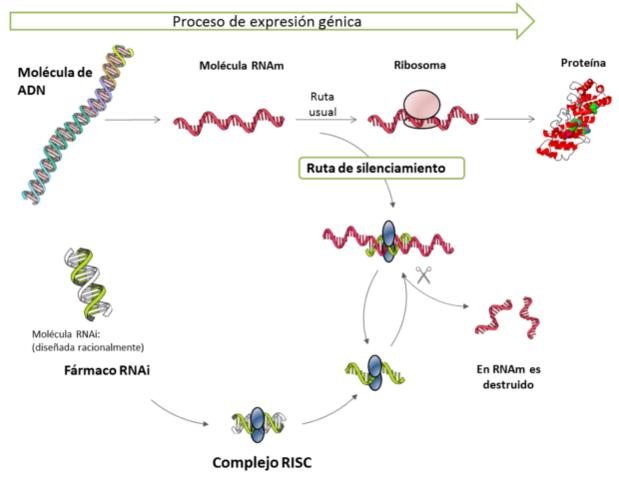 Fase I de ensayos clínicos indica RNAi fármaco es seguro y bien tolerado .