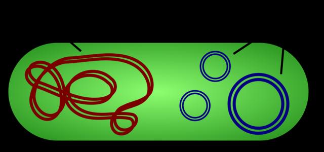 Plasmid DNA