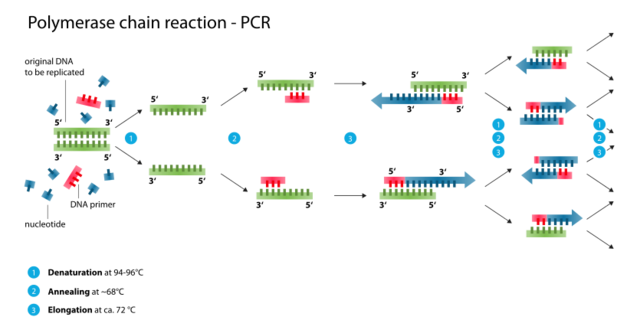 Technology: Polymerase Chain Reaction