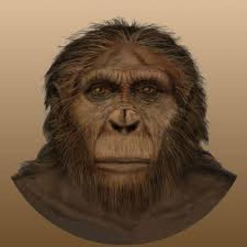 Paranthropus aethiopicus 1