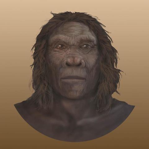 Homo habilis 1