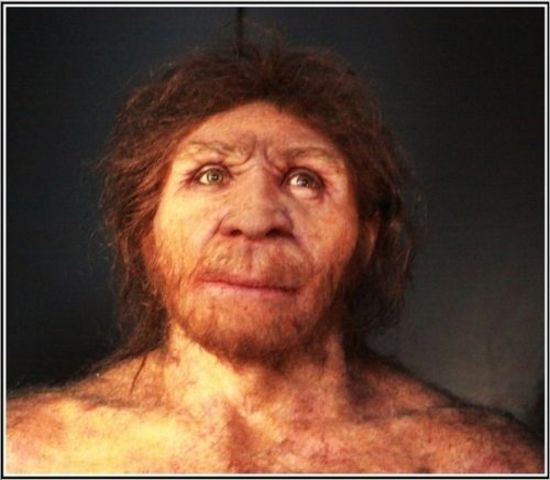 Homo antecessor 1