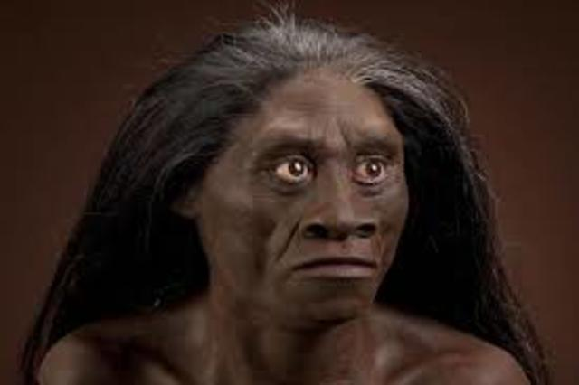 Homo floresiensis 1