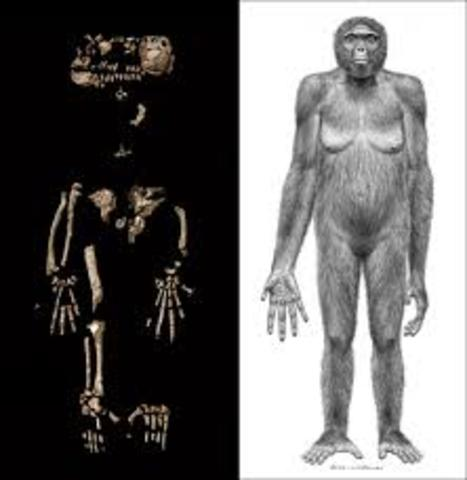 Ardi, el homínido más antiguo