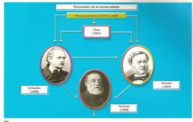 Els alemanys Matthias J. Schleiden,Theodor Schwann van establir la Teoria cel·lular