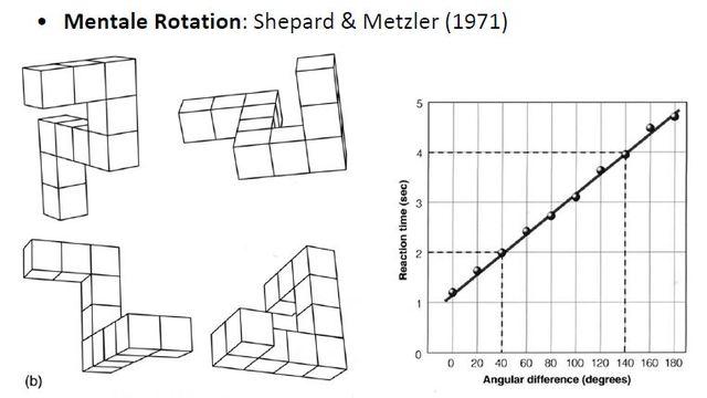 Mentale Rotation, Shepard+Metzler