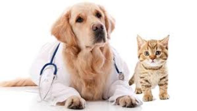 Quiero una veterinaria