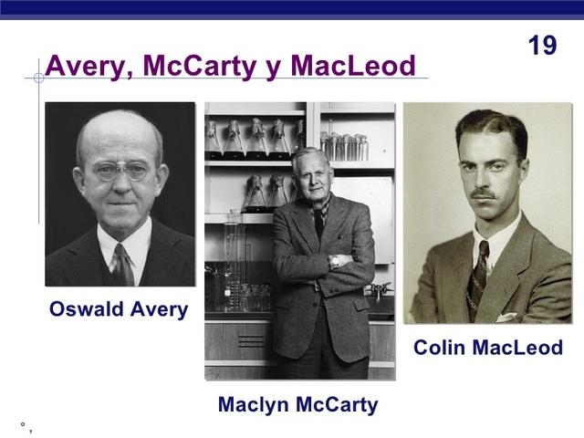 Oswald Avery, Colin Mc Leord y Maclyn Mc carty