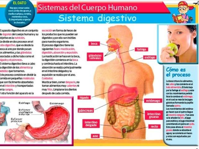 Generalidades S. digestivo