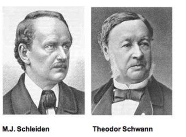 Theodor Scwann y Matthias Scheiden (1838)