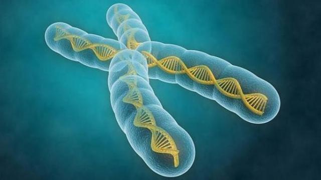 Los cromosomas (1870)
