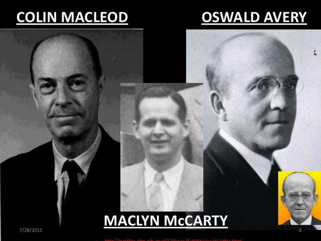 Oswald Avery, Colin Macleod y Maclyn Mccarty (1944)