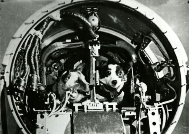 Sputnik 5