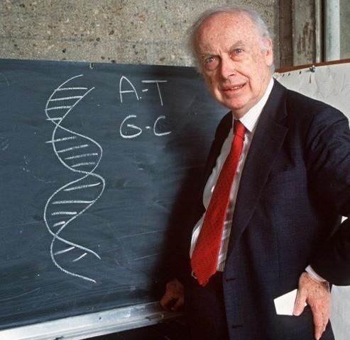 1953. d.C.- Investigación del genoma humano