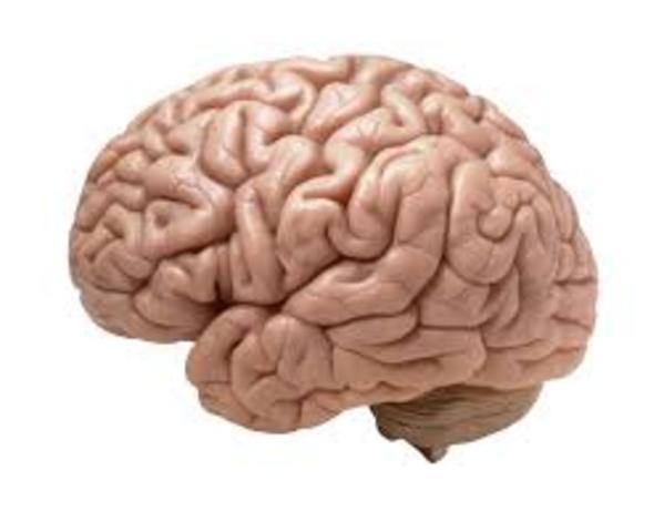 inicio del movimiento de salud mental con la publicacioón en el Mind that found itself de Clifford Beers