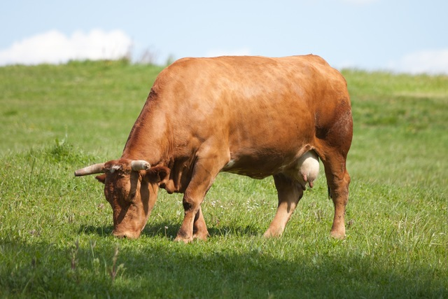 Taurine cattle traded