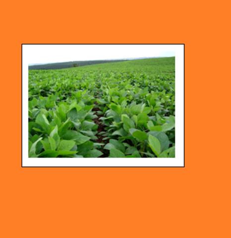 SOJA, MAÍZ Y ALGODÓN: LA BIOTECNOLOGÍA EN LA AGRICULTURA