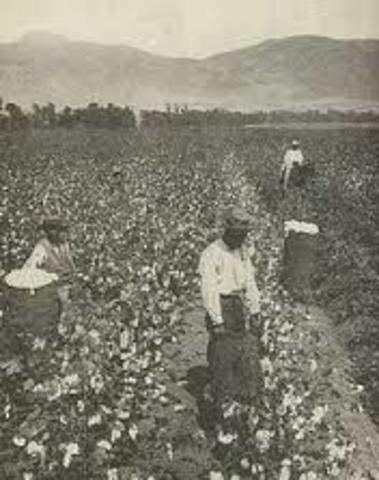 Exportación de algodón.