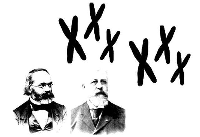 Cromosomas, cromosomas por todas partes