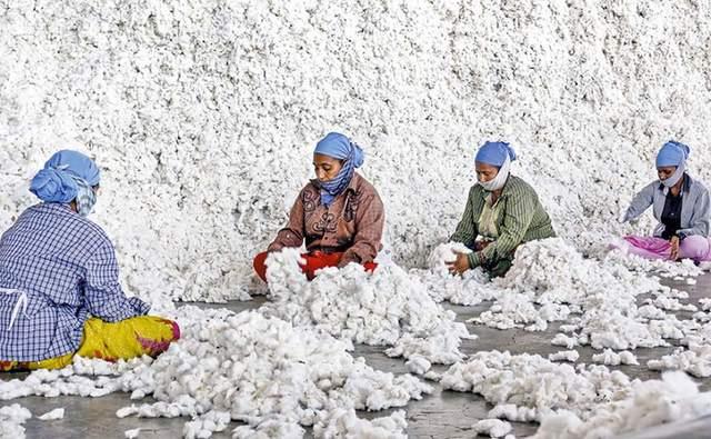 Exportación de algodón