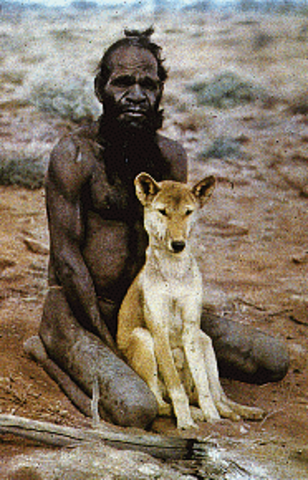 •2000 BC: The Dingo is the first domesticated animal to reach Australia.