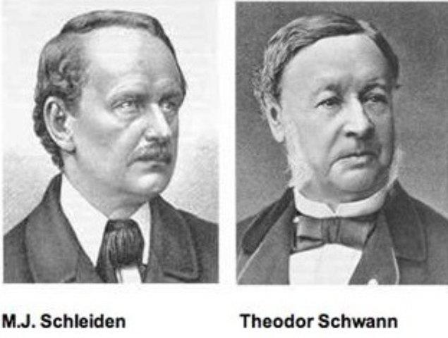 "Mathias Schleiden y Theodor Schwann postulan ""La teoría Celular"""