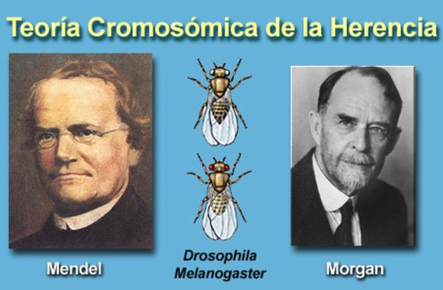 Mendel y Biólogos celulares.
