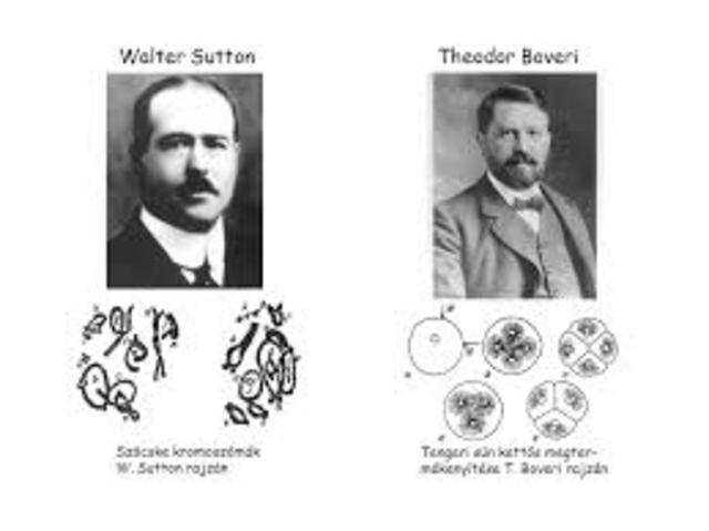 Theodor Boveri y Walter Sutton