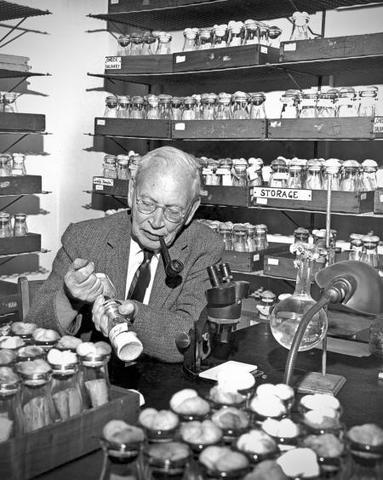 Alfred Sturtevant