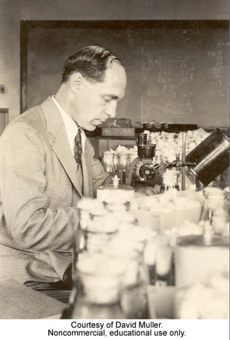 H.J. Muller.