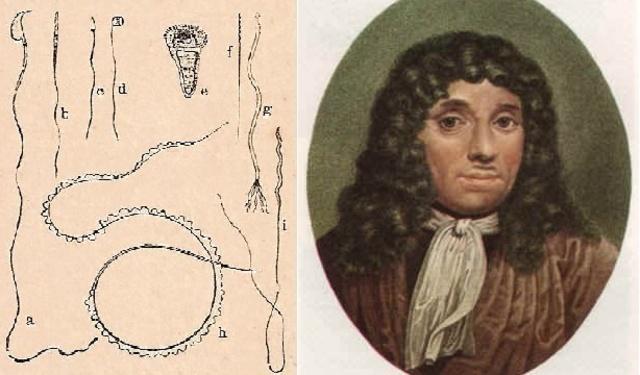 Anton van Leeuwenhoek observael esperma animal a través del microscopio.