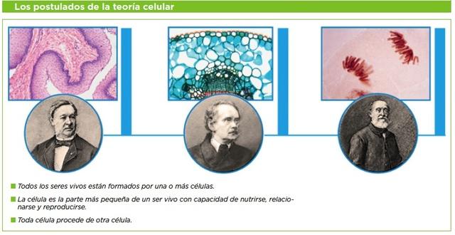 Teoría celular: todos los organismos vivos están compuestos por células.