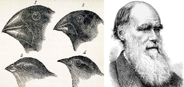 Darwin hace pública su teoría sobre la evolución de las especies