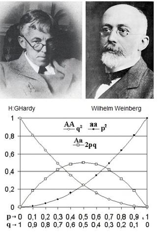 Ley de Hardy-Weinberg