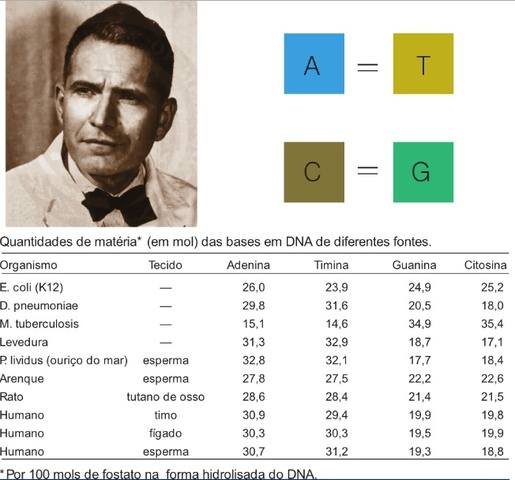 Erwin Chargaff Nucleotidos