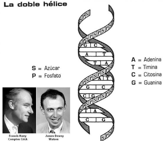 James D. Watson y Francis Crick Doble Hélice .