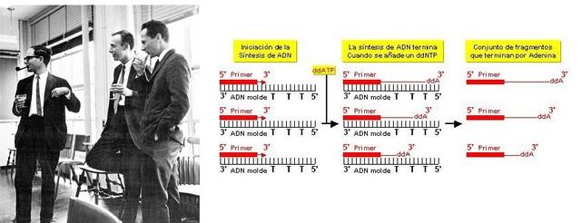 Primera secuenciación del ADN por Fred Sanger, Walter Gilbert y Allan Maxam.