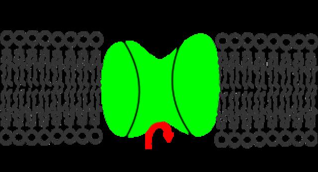 Bomba Sodio- Potasio